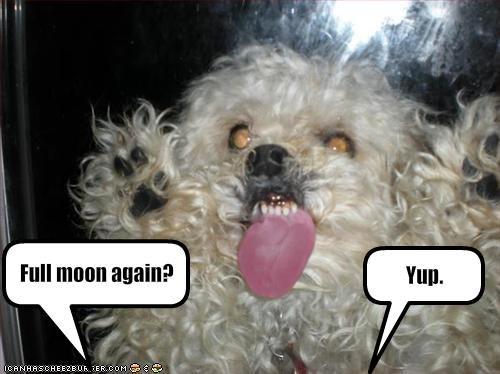 crazy moon teeth tongue whatbreed - 1952792832