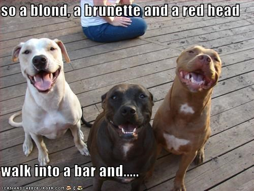 bar joke pitbull - 1953324288