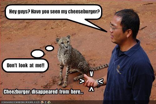 Cheezburger Image 1954356992