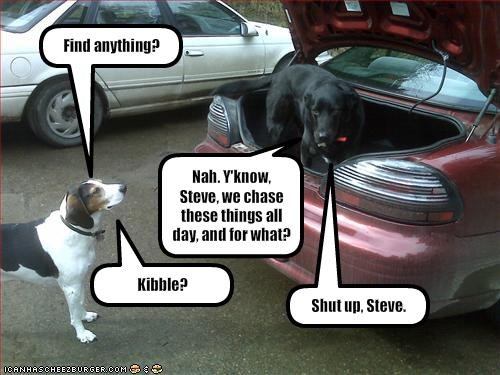 cars,chasing,kibble,philosophical,trunk,whatbreed