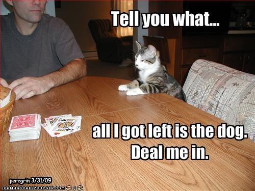 cards gambling loldogs - 1956281088