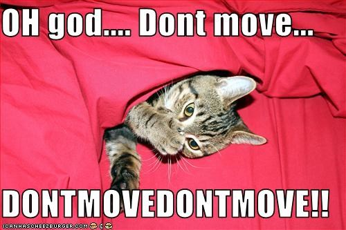 OH god.... Dont move...  DONTMOVEDONTMOVE!!