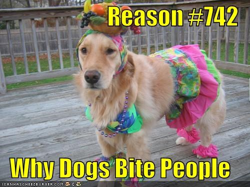 Reason #742 Why Dogs Bite People - Cheezburger - Funny Memes