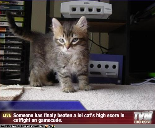 - Someone has finaly beaten a lol cat's high score in catfight on gamecude.