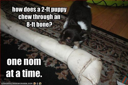 big,bone,chew,chihuahua,eating,giant,little,nom nom nom