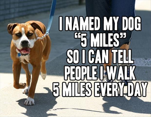 pets names funny - 1963013