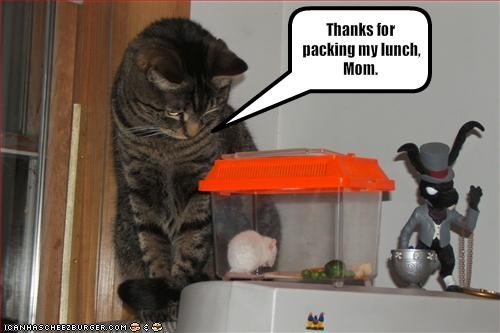 lolmice,lunch,momcat,nom nom nom,thx