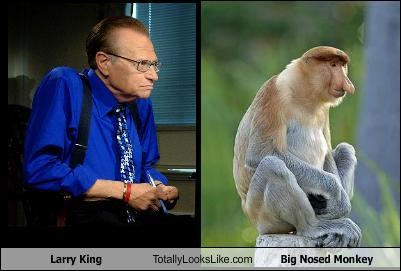 animals,Larry King,monkey,Proboscis Monkey,talk show