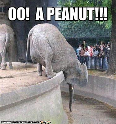 excited,hungry,lolelephants,nom nom nom