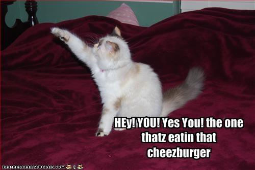 Cheezburger Image 1965891328