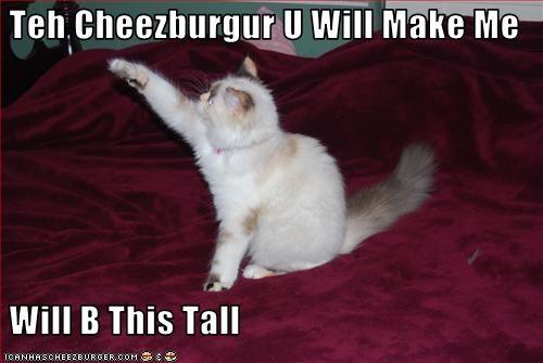Cheezburger Image 1966406400