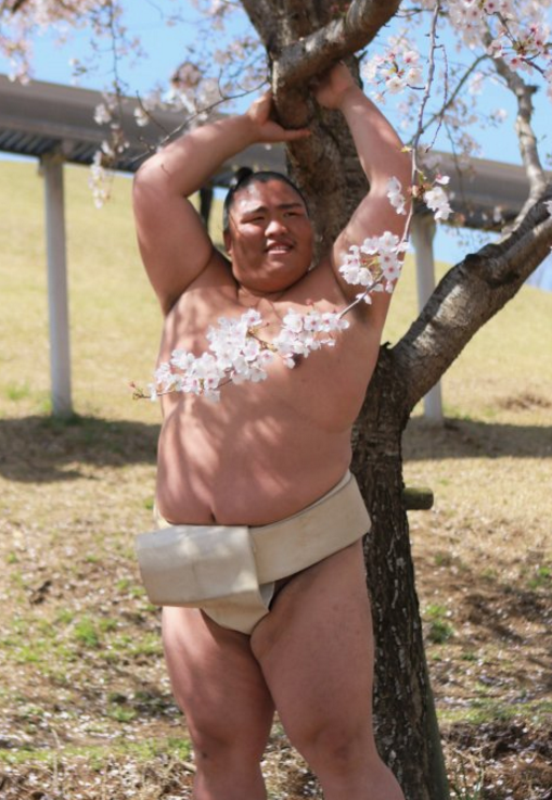twitter sumo reactions