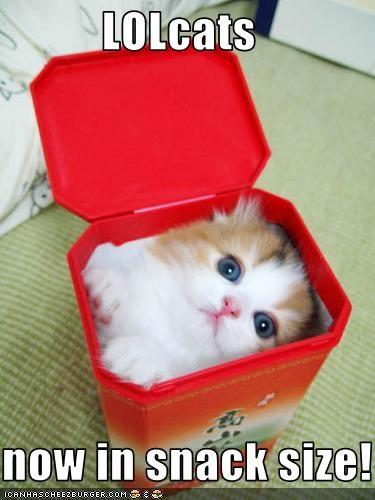 cute kitten snack - 1966872320
