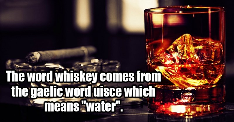 23 Fun Facts That Are as Random as They Are Awesome