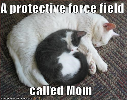 cute,forcefield,kitten,momcat