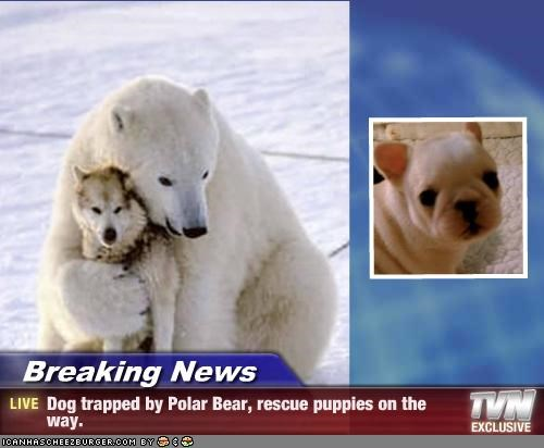Breaking News Dog Trapped By Polar Bear Rescue Puppies On The Way