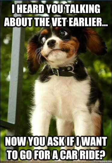 pets clinic Memes vet funny - 1972997