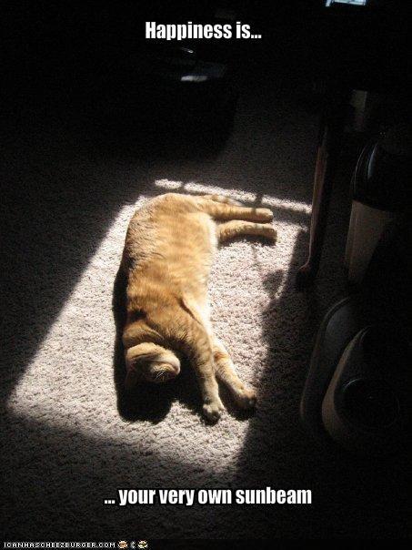 happy nap sunshine - 1975314688