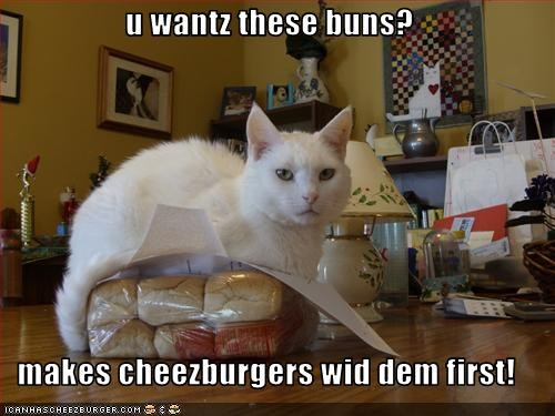 Cheezburger Image 1976418048
