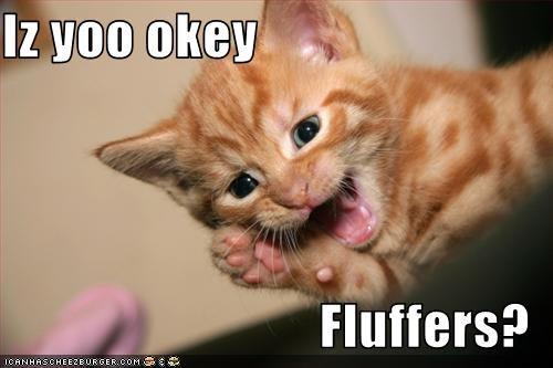 Iz yoo okey  Fluffers?