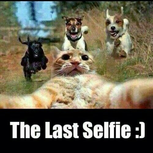 funny animal selfies