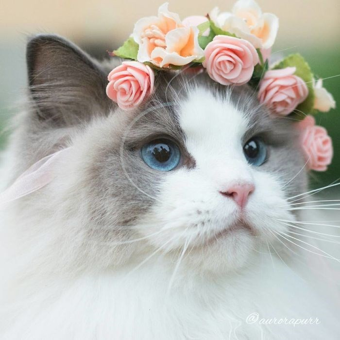 instagram cute Cats beautiful - 1984261
