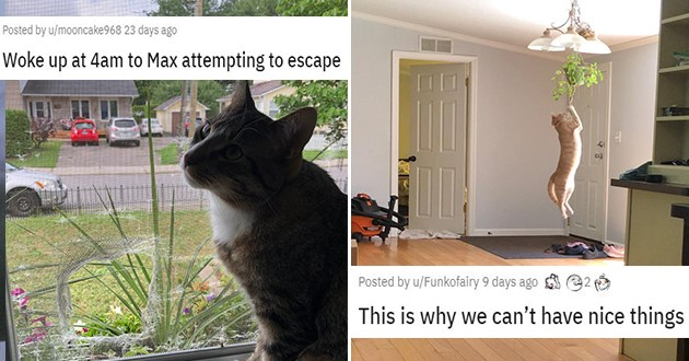 cat cats funny lol jerks hilarious fail fails vids pics assholes trouble troublemakers animals adorable | Woke up at 4am to Max attempting to escape cat tearing a hole in a window net | This is why we can't have nice things cat dangling from a hanging plant