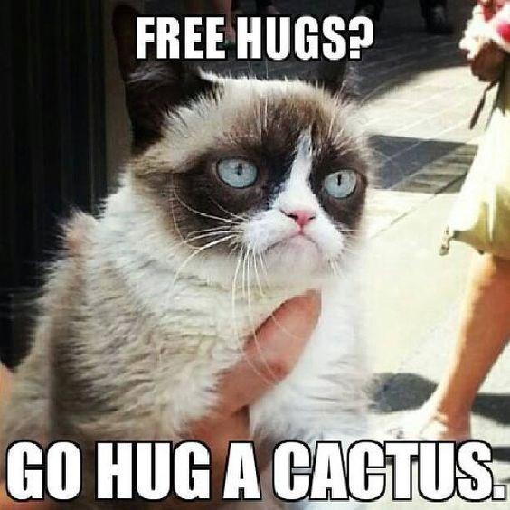 Grumpy Cat Memes Cats funny tardar sauce - 1985541