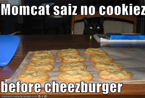 Cheezburger Image 1985966336
