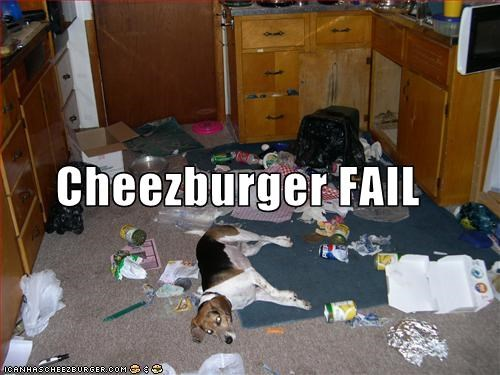 Cheezburger Image 1987976448