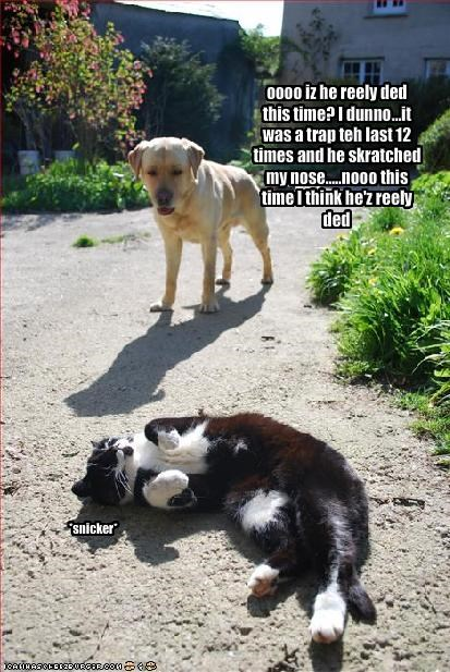 deception,laughing,lolcats,nose,play dead,playing,scratch,trap,yellow lab