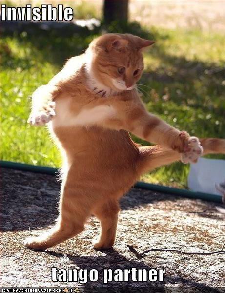 Cats dance invisible lolcats tango - 1991736576