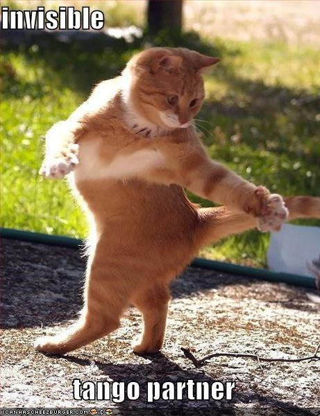Cats dance invisible lolcats tango - 1991736576