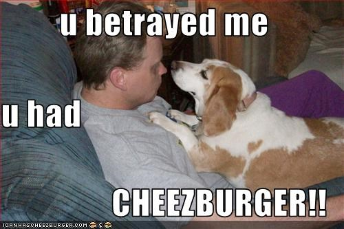 Cheezburger Image 1991773440