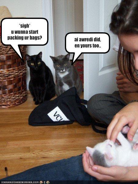 jealous,kitten