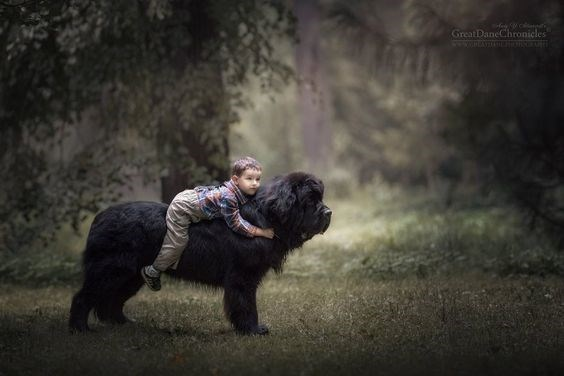 Tiny kid on a large black dog in an outdoor forest setting.