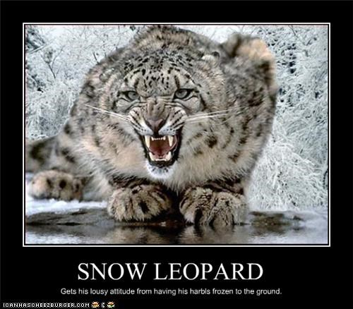 Snow Leopard Cheezburger Funny Memes Funny Pictures
