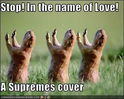 Stop In The Name Of Love A Supremes Cover Cheezburger Funny Memes Funny Pictures
