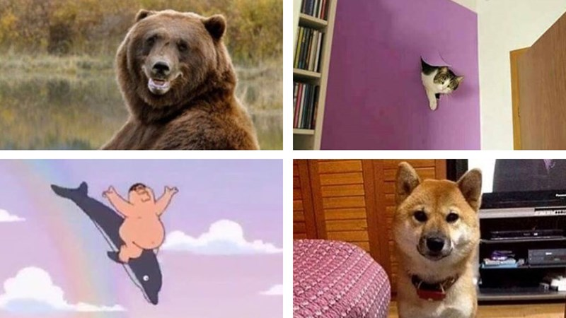 Instagram meme roundup, lots of dogs, animals, texting.