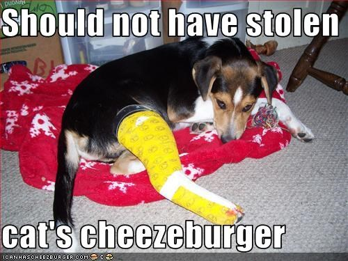 Cheezburger Image 1997762816