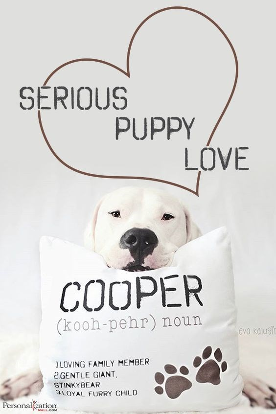 Serious Puppy Love Pillow for your dog