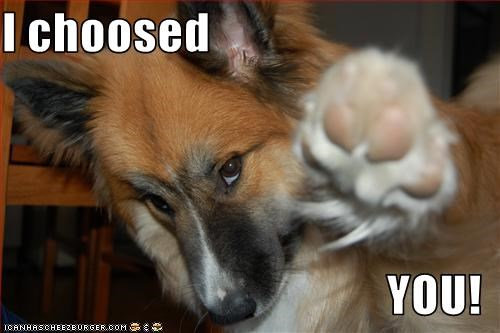 choose,collie,paw,pick,point