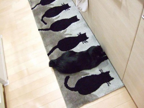 Funny picture of a cat on a rug of cats pattern.