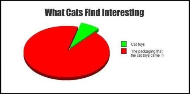 Funny pie chart of what how cats prefer playing with a box than the toy that came in it.