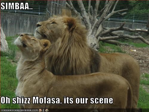 SIMBAA..  Oh shizz Mofasa, its our scene