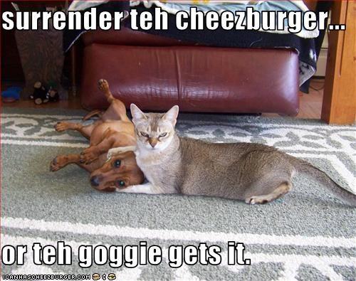 Cheezburger Image 2006203648