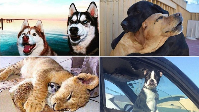 List of memes taken from Instagram, lots of dogs and animals.