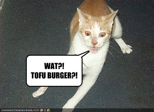 Cheezburger Image 2006739712