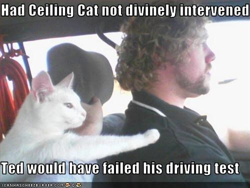 Had Ceiling Cat Not Divinely Intervened Ted Would Have Failed His