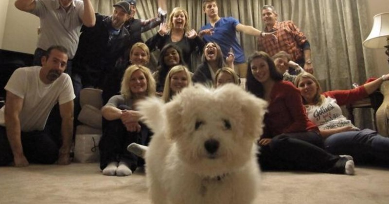 funny dog photobomb fails